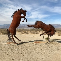 Quarrelsome Horses